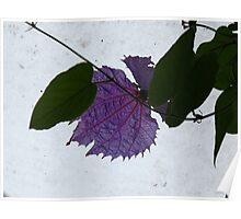 Purple Batwing Flower Poster