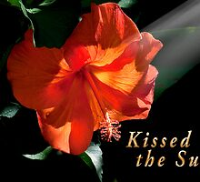 Kissed by the Sun Card by TJ Baccari Photography