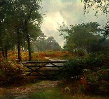 Autumn by Catherine Hamilton-Veal  ©