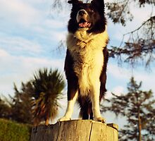 On the Stump by Michael Haslam