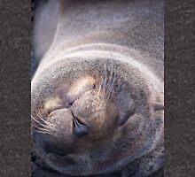 Galapagos Seal Hoodie
