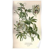 Favourite flowers of garden and greenhouse Edward Step 1896 1897 Volume 2 0109 Passion Flower Poster