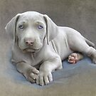 Weimaraner Puppy Sketch by Leslie Nicole