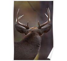 Don't look back - White-tailed Deer Poster