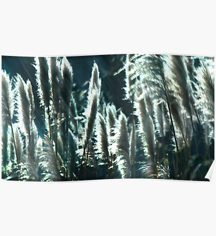 Ethereal Cat Tails of California Poster