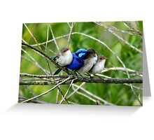 Spring Time Blue Wren and Friends Greeting Card