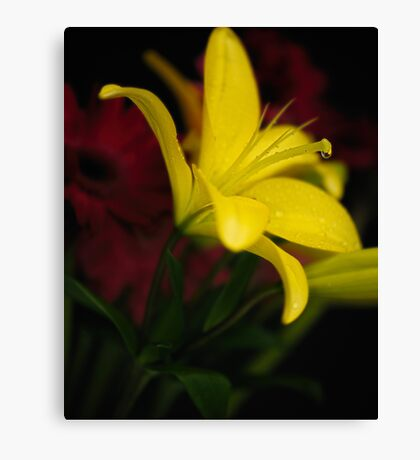 Low-key Yellow Lily Canvas Print