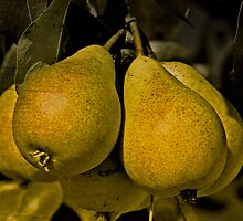 Pears by Dania Reichmuth