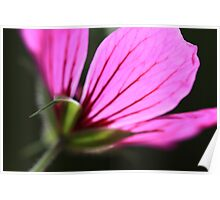 backlit flower Poster