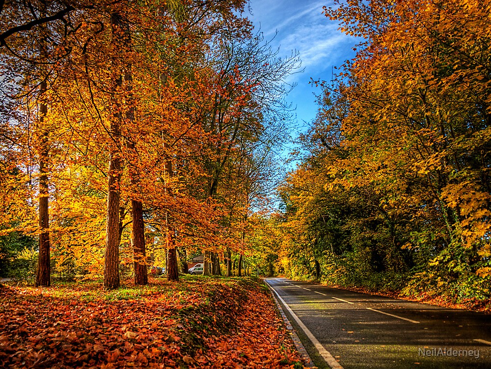 Winchester Autumn Colour by NeilAlderney
