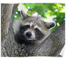Sad raccoon eyes Poster