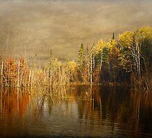 Wilderness by Gary Smith