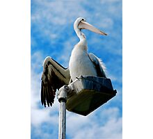 PELICAN  WATCHER Photographic Print