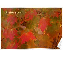 Autumnal Orange Poster