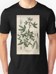 Favourite flowers of garden and greenhouse Edward Step 1896 1897 Volume 1 0219 Sensitive Plant Unisex T-Shirt