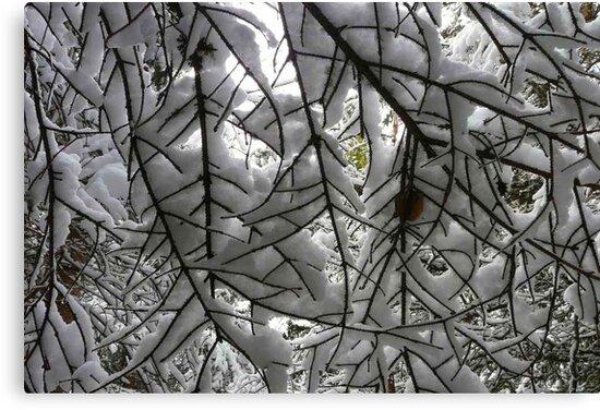 A Peek From Underneath by MaeBelle