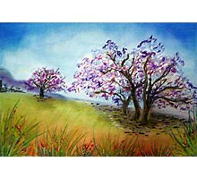 Under the Jacaranda Tree Photographic Print