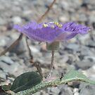 Purple flower by Loretta Marvin