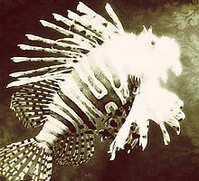 Lionfish Print by DuranBlakeley