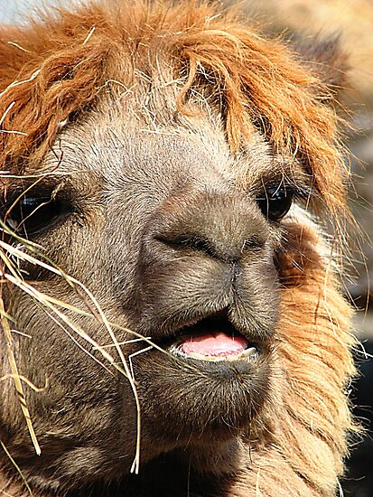 Hey!!!! Don't Be Making Fun Of My Hair !!!!!! by NatureGreeting Cards ©ccwri