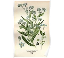 Favourite flowers of garden and greenhouse Edward Step 1896 1897 Volume 3 0125 Alpine Forget Me Not Poster
