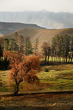 Drakensberg, South Africa by Sharon Bishop