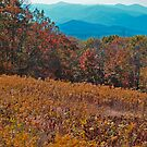 Blue Ridge Mountain View by Leslie Wood