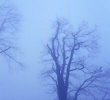 Blue, foggy nightfall 1 by intensivelight