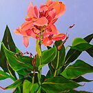 Canna Lily  by marlene veronique holdsworth