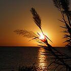 Pampas sunrise by Angela McIntyre
