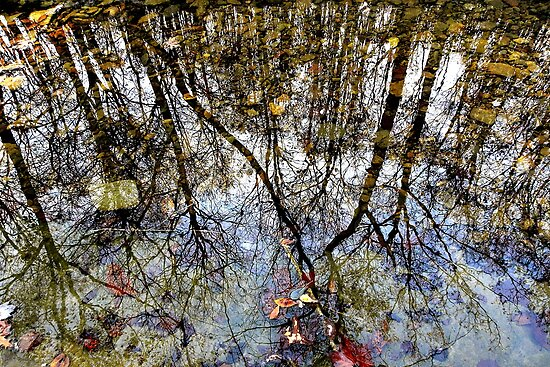 Stone Creek Reflections by NatureGreeting Cards ©ccwri