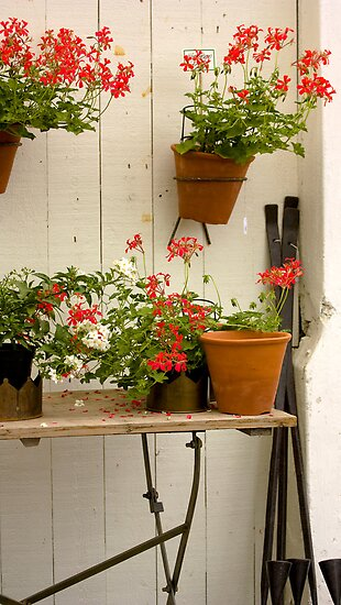 Geraniums by Linn Arvidsson