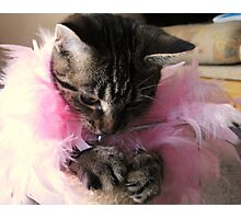 Paws and Feathers Photographic Print