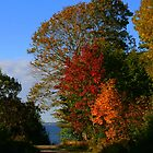 Autumn Leaves along a Country Road by Laurel Talabere