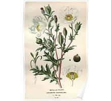 Favourite flowers of garden and greenhouse Edward Step 1896 1897 Volume 1 0069 Mexican Poppy Poster