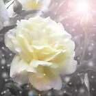 Yellow Rose Of Peace~(C) by Lisa Michelle Garrett