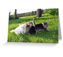 Kittens Greeting Card