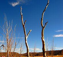 Dead Trees in a Field by JoAnn Glennie