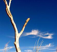 Dead Tree by JoAnn Glennie