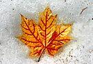 Leaf in Snow by Debbie Pinard