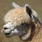 Soft n Fuzzy by RebeccaBlackman