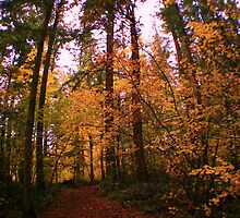 Fall Foliage Canopy by skreklow