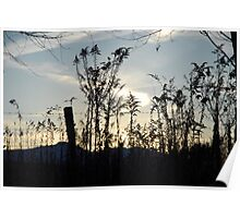 Sunset Sillouette Poster