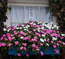 Impatiens Window Box by phil decocco
