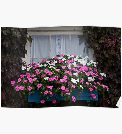 Impatiens Window Box Poster