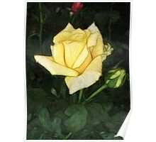 Elegant Yellow Rose 1 Painterly Poster