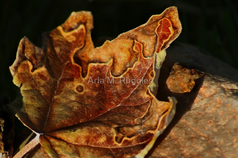 Autumn's Abstraction by Arla M. Ruggles