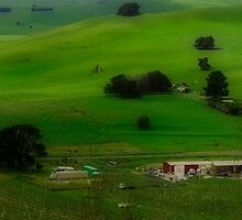 A Church, A Winery, A House, A Hill and A Few Cows by Rebelle