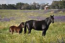 Mare and foal by julie anne  grattan
