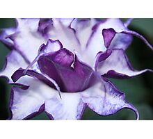 Purple Spiky Flower Photographic Print